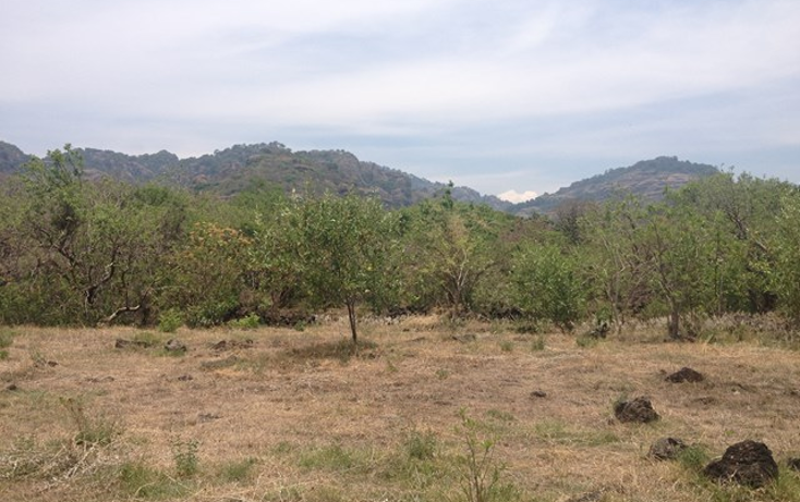 Foto de terreno habitacional en venta en  , santo domingo, tepoztlán, morelos, 1598242 No. 10