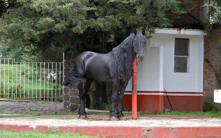 Foto de rancho en venta en  , santo tomas ajusco, tlalpan, distrito federal, 2000177 No. 38