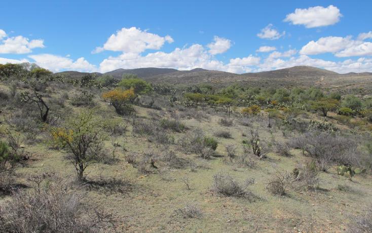 Foto de terreno comercial en venta en  , sauceda de la borda, vetagrande, zacatecas, 1150225 No. 04