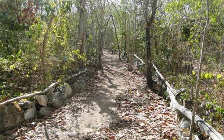 Foto de terreno habitacional en venta en  , selvamar, solidaridad, quintana roo, 823659 No. 07