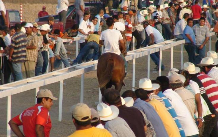 Foto de rancho en venta en  , sentispac, santiago ixcuintla, nayarit, 411112 No. 14
