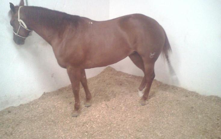 Foto de rancho en venta en  , sentispac, santiago ixcuintla, nayarit, 411112 No. 15
