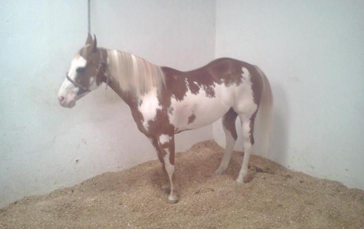 Foto de rancho en venta en  , sentispac, santiago ixcuintla, nayarit, 411112 No. 16