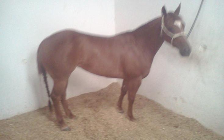 Foto de rancho en venta en  , sentispac, santiago ixcuintla, nayarit, 411112 No. 18
