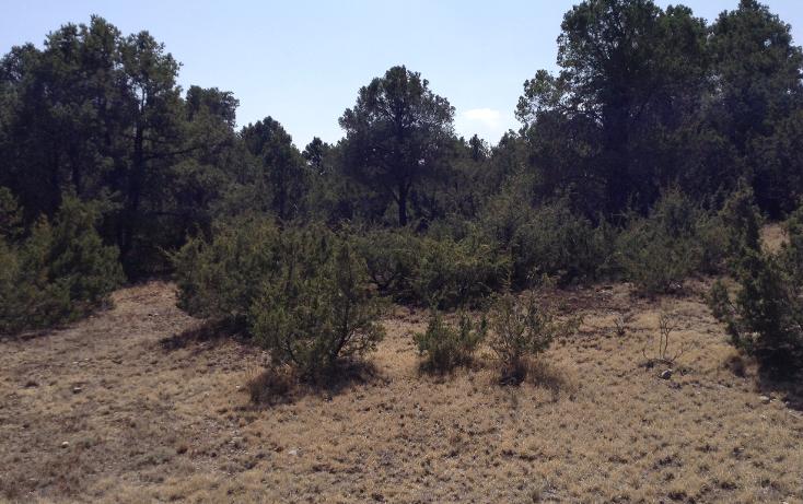 Foto de terreno habitacional en venta en  , sierra hermosa, arteaga, coahuila de zaragoza, 1112107 No. 10