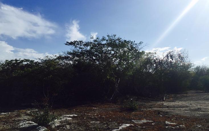 Foto de terreno habitacional en venta en  , sierra papacal, mérida, yucatán, 1121417 No. 02