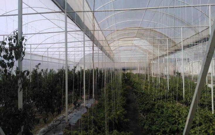 Foto de terreno comercial en venta en sn, ajolotla, chignahuapan, puebla, 1616872 no 04