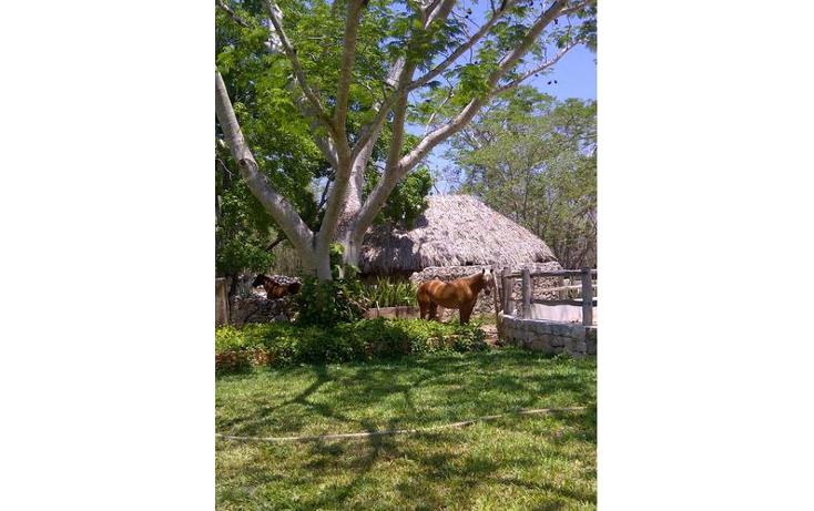 Foto de terreno habitacional en venta en  , sudzal, sudzal, yucat?n, 1088441 No. 03