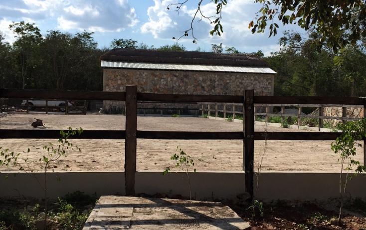 Foto de terreno habitacional en venta en  , sudzal, sudzal, yucat?n, 1088441 No. 25