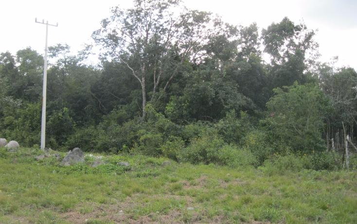 Foto de terreno habitacional en venta en  , supermanzana 117, benito juárez, quintana roo, 1637738 No. 01