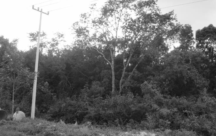 Foto de terreno habitacional en venta en  , supermanzana 117, benito juárez, quintana roo, 1637738 No. 03