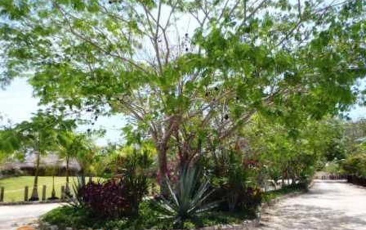 Foto de terreno habitacional en venta en tablaje 32711 , dzibilchaltún, mérida, yucatán, 3423694 No. 03