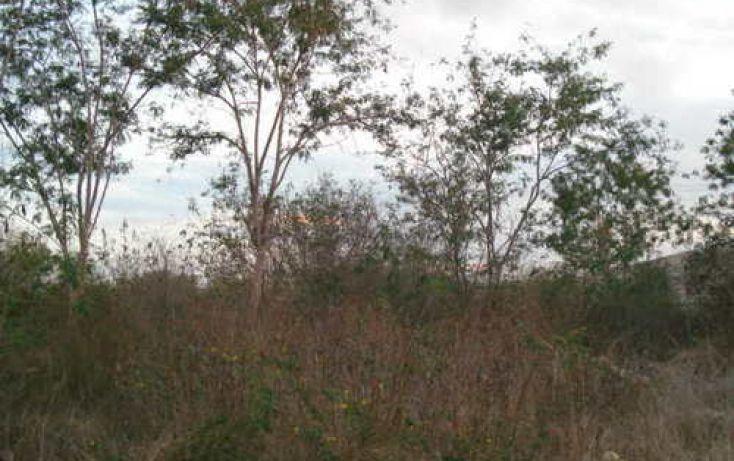 Foto de terreno habitacional en venta en, tamanché, mérida, yucatán, 1088511 no 03