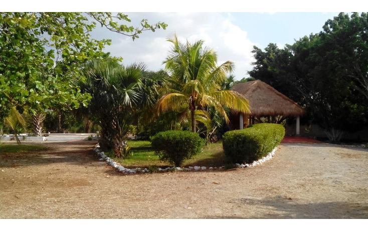 Foto de rancho en renta en  , tamanché, mérida, yucatán, 853657 No. 03