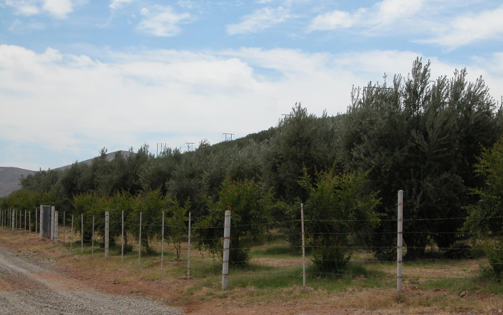 Foto de rancho en venta en  , tanama, tecate, baja california, 1247517 No. 03