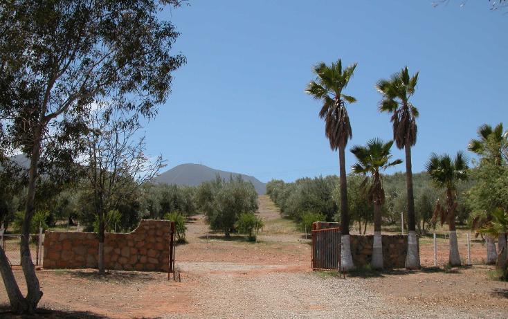 Foto de rancho en venta en  , tanama, tecate, baja california, 1247517 No. 04