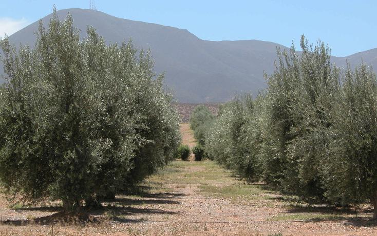 Foto de rancho en venta en  , tanama, tecate, baja california, 1247517 No. 13
