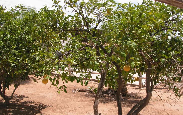 Foto de rancho en venta en  , tanama, tecate, baja california, 1247517 No. 14