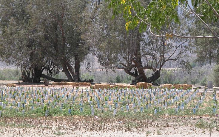 Foto de rancho en venta en  , tanama, tecate, baja california, 1247517 No. 15