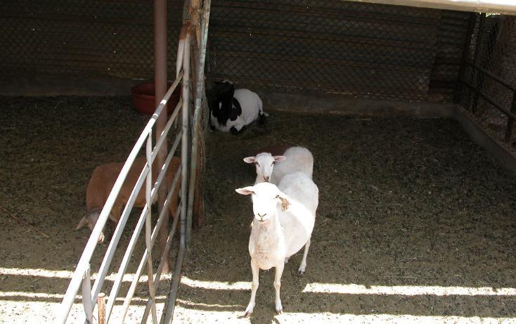 Foto de rancho en venta en  , tanama, tecate, baja california, 1247517 No. 17