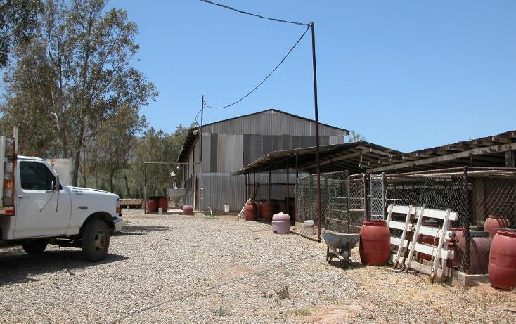 Foto de rancho en venta en  , tanama, tecate, baja california, 1247517 No. 18