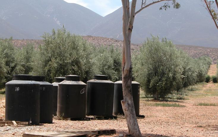 Foto de rancho en venta en  , tanama, tecate, baja california, 1247517 No. 21