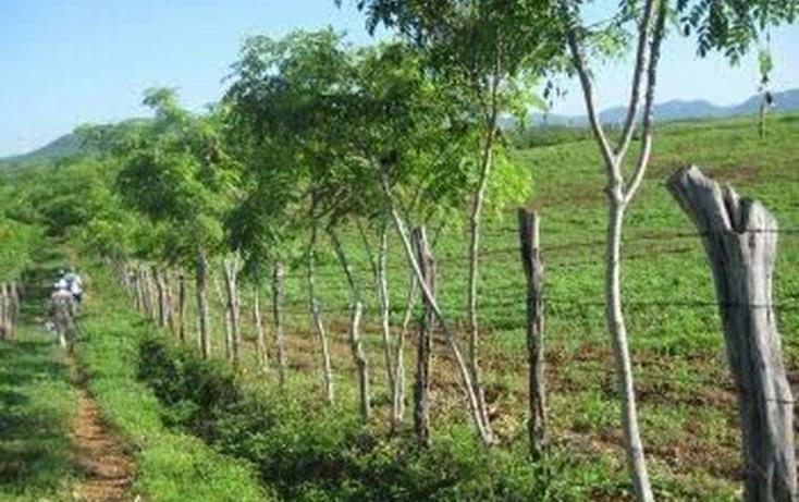 Foto de rancho en venta en  , tantoyuca centro, tantoyuca, veracruz de ignacio de la llave, 1376897 No. 02