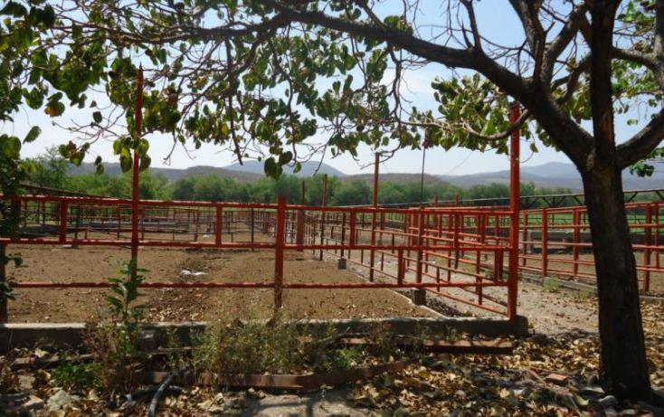 Foto de terreno habitacional en venta en tehuitla, tehuixtla, jojutla, morelos, 1816622 no 05
