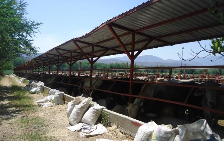 Foto de terreno comercial en venta en  , tehuixtla, jojutla, morelos, 378589 No. 08