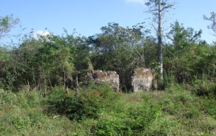 Foto de rancho en venta en  , tekit, tekit, yucatán, 1283139 No. 11