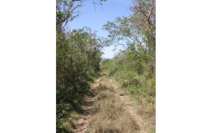Foto de rancho en venta en  , tekit, tekit, yucatán, 1283139 No. 18
