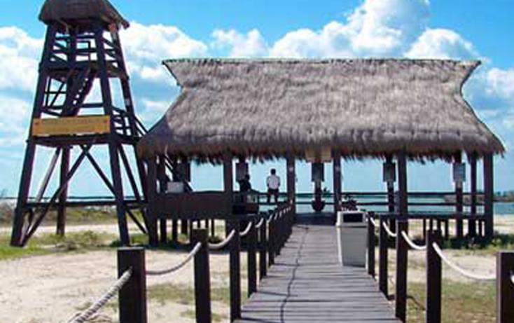 Foto de terreno habitacional en venta en  , telchac puerto, telchac puerto, yucatán, 1334527 No. 05