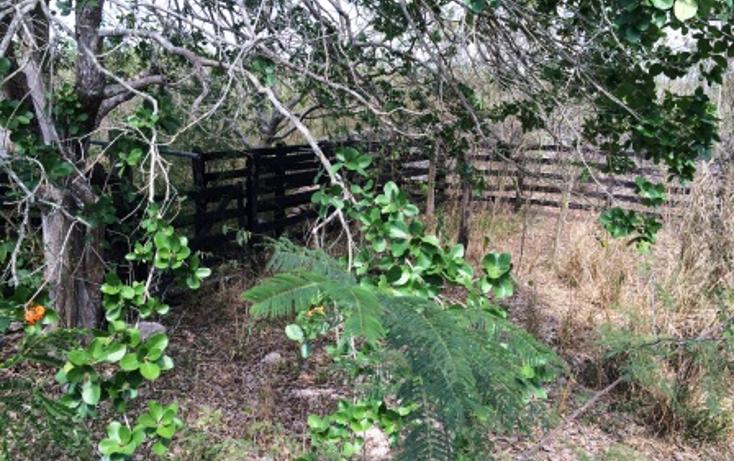 Foto de rancho en venta en  , temax, temax, yucatán, 1268857 No. 08