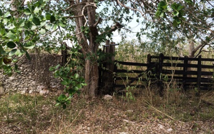 Foto de rancho en venta en  , temax, temax, yucatán, 1268857 No. 10