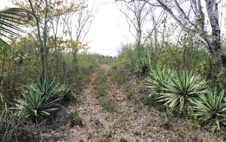 Foto de rancho en venta en  , temax, temax, yucatán, 1268857 No. 11