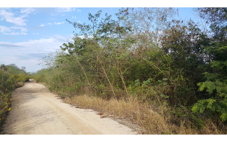 Foto de terreno habitacional en venta en  , temozon norte, m?rida, yucat?n, 1775048 No. 08
