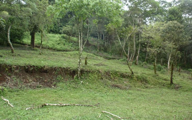 Foto de terreno habitacional en venta en  , teocelo, teocelo, veracruz de ignacio de la llave, 1549680 No. 05