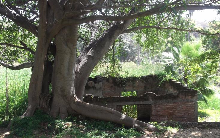 Foto de terreno habitacional en renta en  , tequesquitengo, jojutla, morelos, 1115725 No. 08