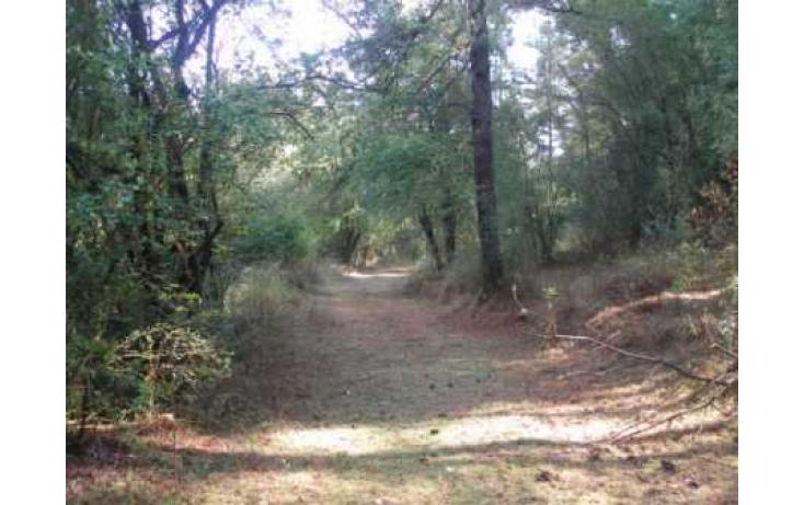 Foto de terreno habitacional con id 86847 en venta en carretera jilotzingo  tlazala santa ana jilotzingo no 01