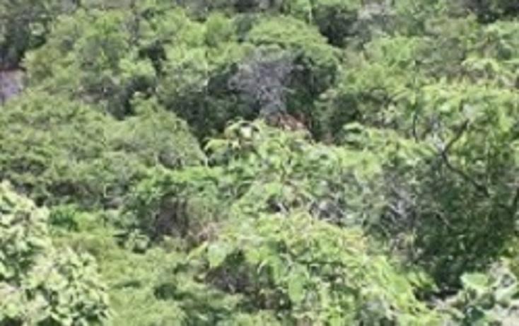 Foto de terreno habitacional con id 323440 en venta en magnolia 135 san diego no 04