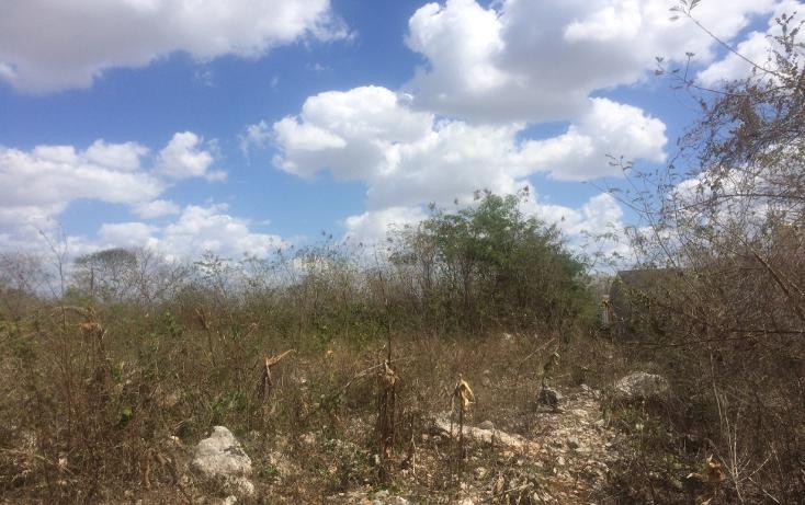 Foto de terreno habitacional en venta en  , tixcacal opichen, mérida, yucatán, 1733656 No. 03