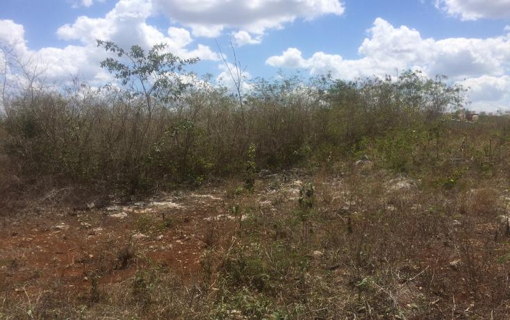 Foto de terreno habitacional en venta en  , tixcacal opichen, mérida, yucatán, 1733656 No. 04