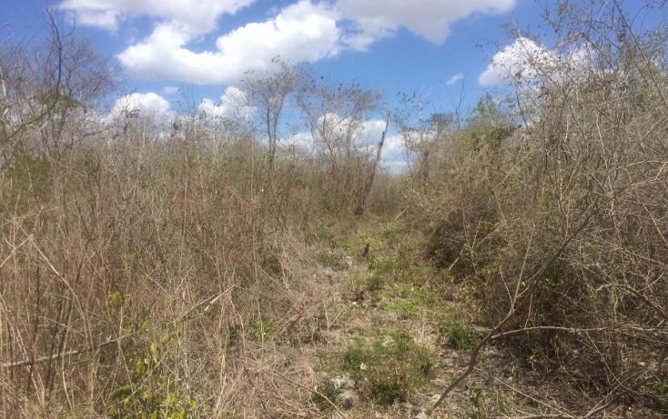 Foto de terreno habitacional en venta en  , tixcacal opichen, mérida, yucatán, 1733656 No. 07