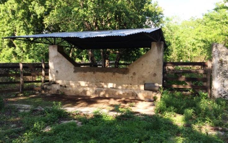 Foto de rancho en venta en  , tixcacaltuyub, yaxcabá, yucatán, 1198323 No. 03