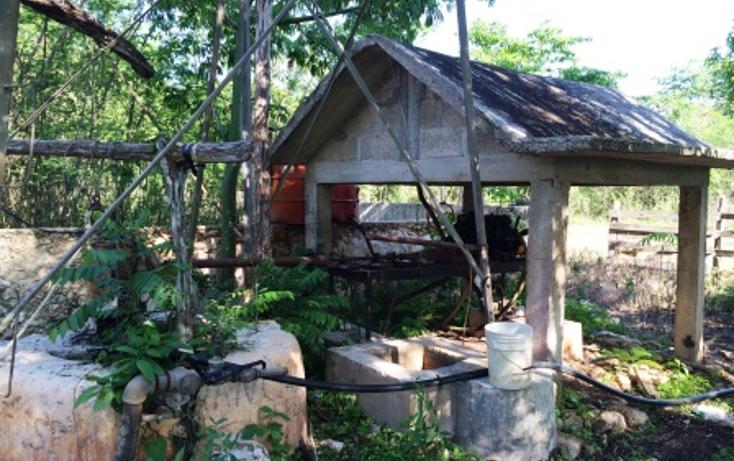 Foto de rancho en venta en  , tixcacaltuyub, yaxcabá, yucatán, 1198323 No. 04