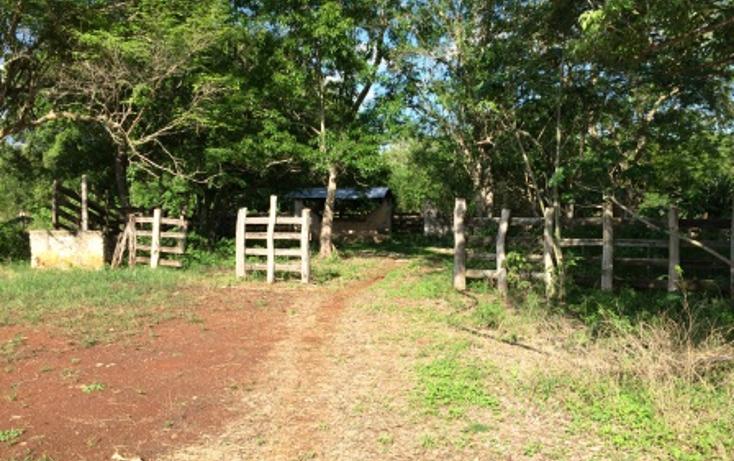 Foto de rancho en venta en  , tixcacaltuyub, yaxcabá, yucatán, 1198323 No. 07