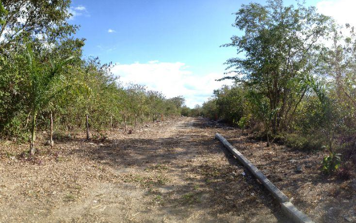 Foto de terreno habitacional en venta en, tixkuncheil, baca, yucatán, 1184905 no 06