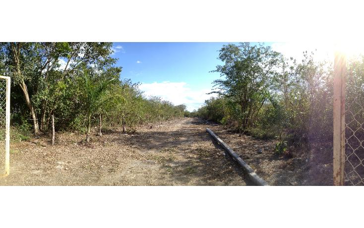 Foto de terreno habitacional en venta en  , tixkuncheil, baca, yucat?n, 1184905 No. 06