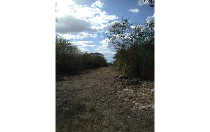 Foto de terreno habitacional en venta en  , tixkuncheil, baca, yucat?n, 1184905 No. 08