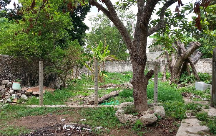 Foto de local en renta en  , tizimin centro, tizim?n, yucat?n, 1299693 No. 14